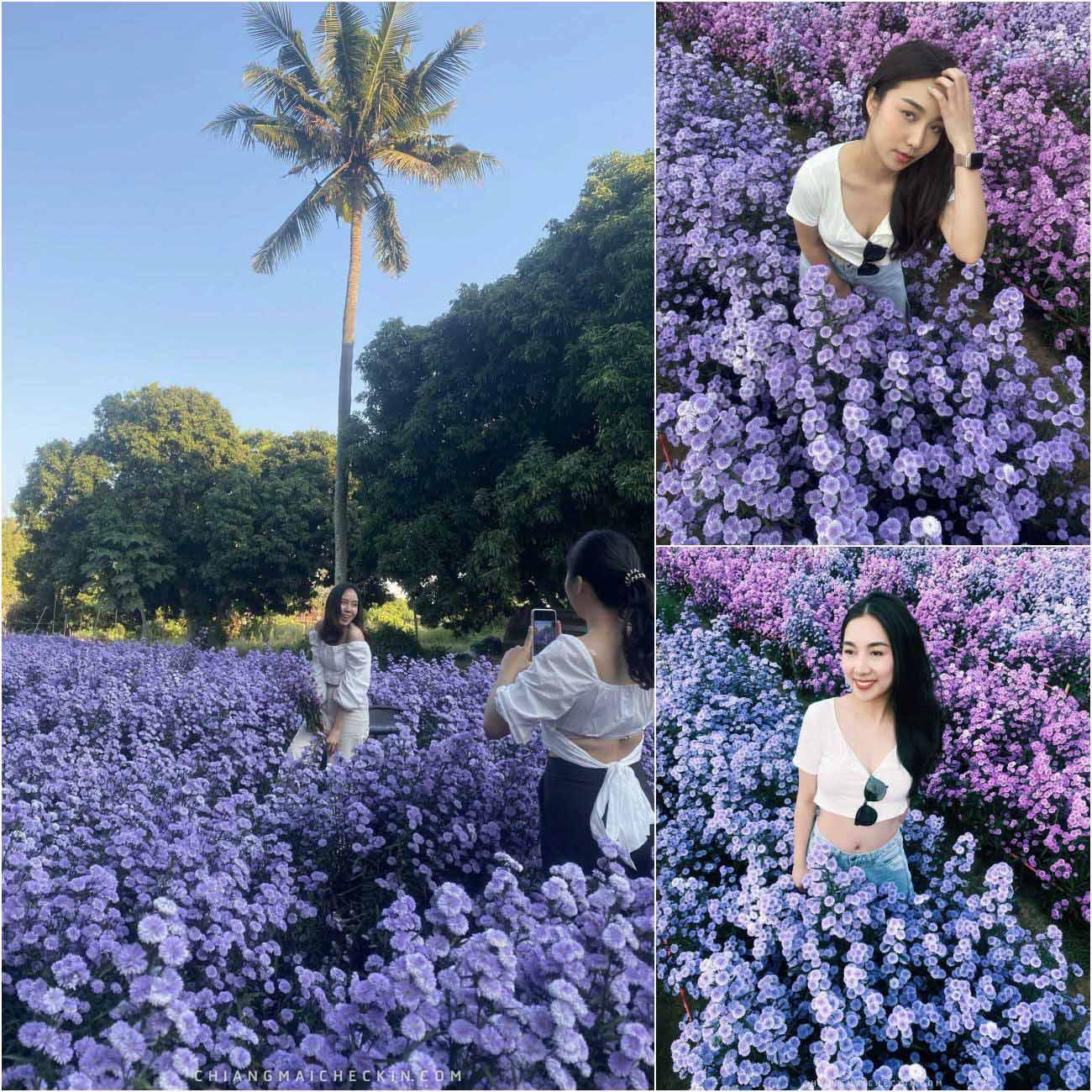 จุดเช็คอินเด็ดๆ สวนดอกไม้ลุงลพ เชียงใหม่พบกับสวนดอกไม้สีสวย วิวดีสวนภายในมีพรอพให้สาวๆถ่ายรูปเก็บกันอีกด้วยแนะนำเลย