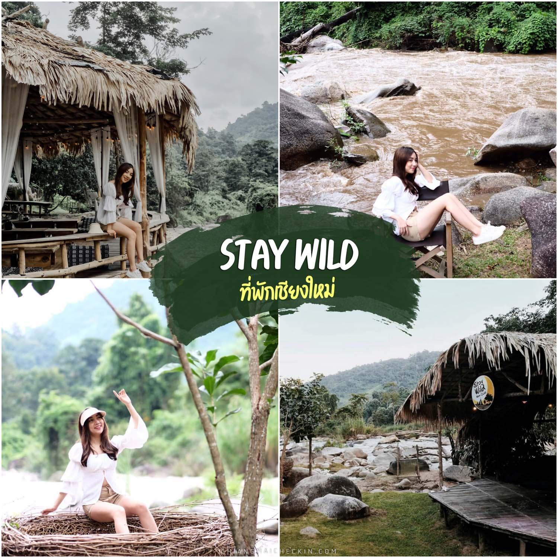 Stay wild เชียงใหม่